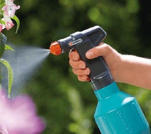 Чем опрыскать хризантему