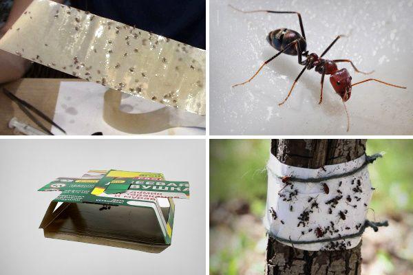 Клеевые ловушки для муравьев