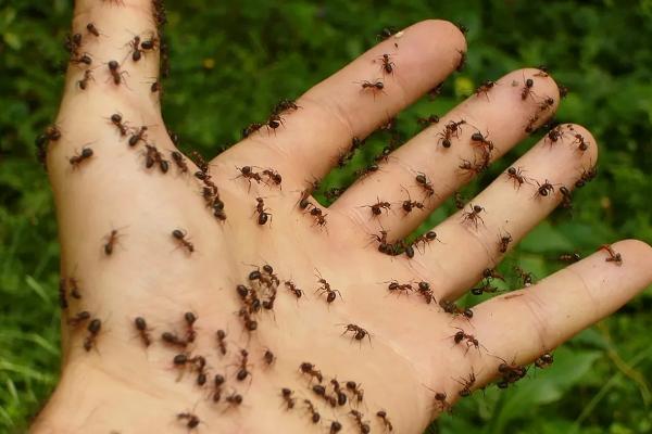 Муравьи на руке