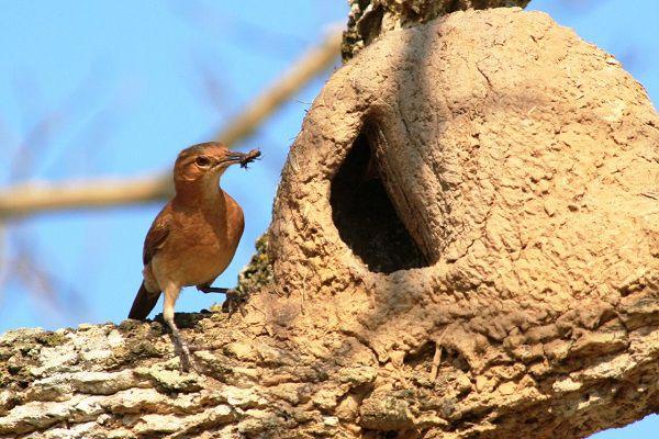 Птица с муравьем