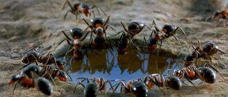 Жизнь муравьев